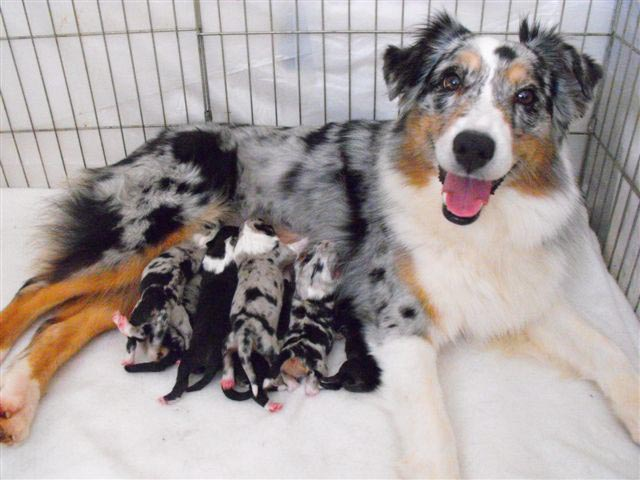 Zoey and her pups
